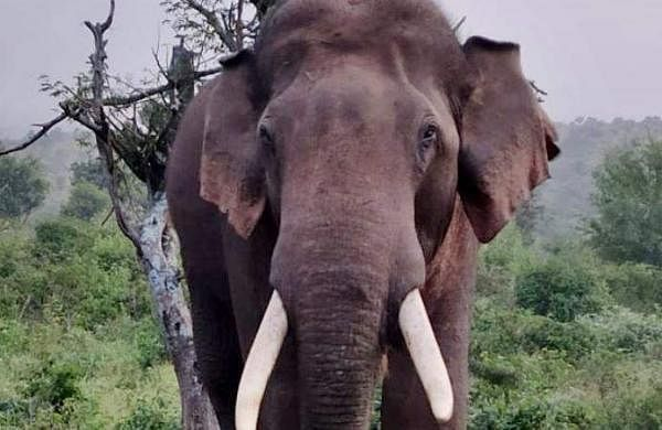 excise vehicle attacked by elephant in wayanad